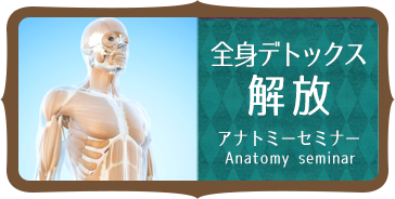 anatomi-